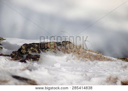 Natural Moss On Stones. Texture In Nature. Rock Surface With Lichen And Moss Texture. Snow Covered M