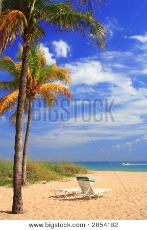 Beach, Palm Trees And Chairs