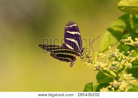 Nature Background Butterfly. Butterfly Insect In Nature. Nature Insect Butterfly On Green Plant Back