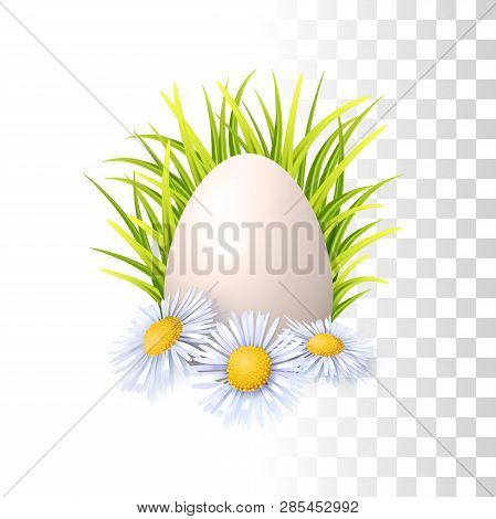 Egg, Grass And Flowers