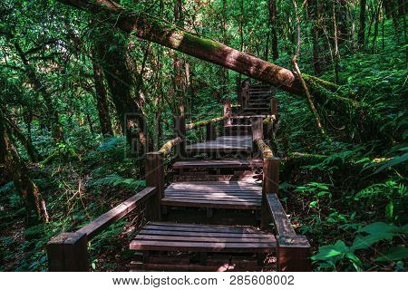 Beautiful Rainforest Jungle Trail, Ang Ka Luang Nature Trail, An Educational Nature Trail Inside A R