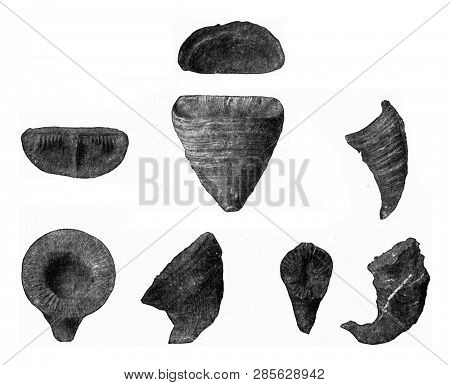 Types of extinct corals from the Paleozoic era, vintage engraved illustration. From the Universe and Humanity, 1910.