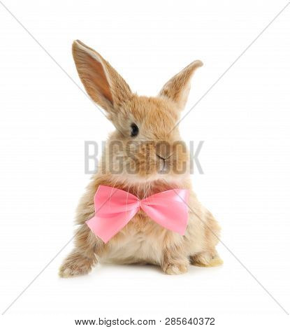 Adorable Furry Easter Bunny With Cute Bow Tie On White Background