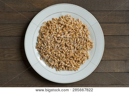 Wheat With Sprouted Germs On Wooden Table, Top View