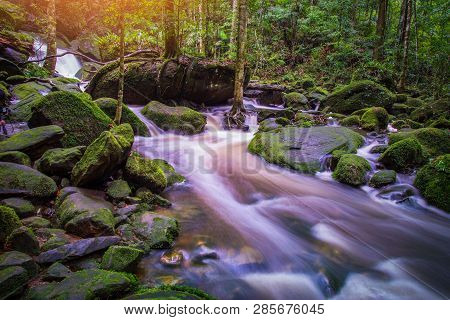 Mountain River Stream Waterfall Green Forest / Landscape Nature Plant Tree Rainforest Jungle With Ro