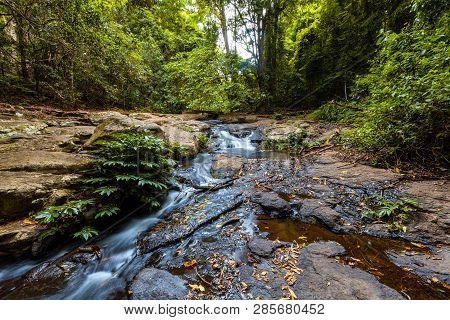 Bubbling Creek In Lush Rainforest. Lamington National Park, Qld, Australia