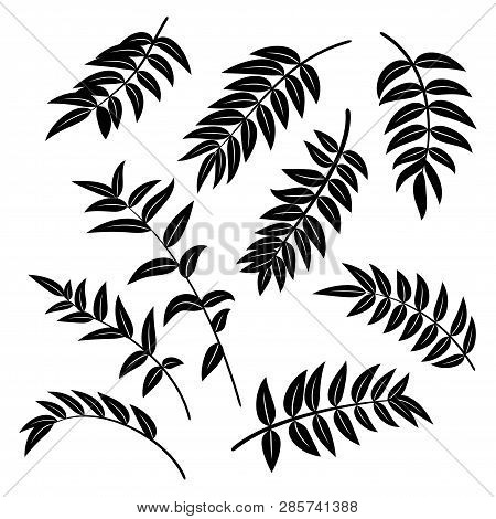 Leaves Of Symbolical Plants, Black Pictograms, Nature Elements Isolated On White. Vector