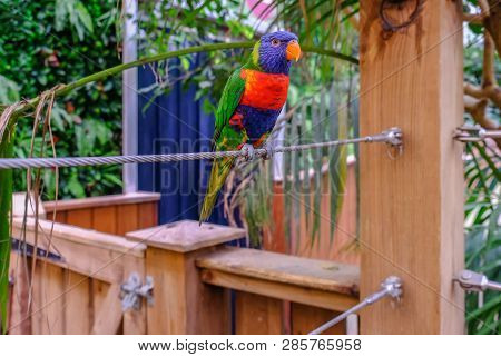 Colchester, Essex,  Uk - July 27, 2018: Close Up Of Single Rainbow Lorikeet Parot Perched On A Steel