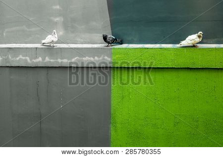 Pigeons Resting On The Concrete Drip Mould Beside The Building