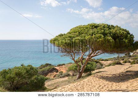 Pine forest, La Breña y Marismas del Barbate Natural Park, Barbate, Cadiz province, Costa de la Luz, Andalusia, Spain