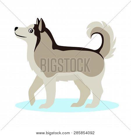 Pretty Alaskan Malamute Icon, Big Furry Dog, Isolated On White Background
