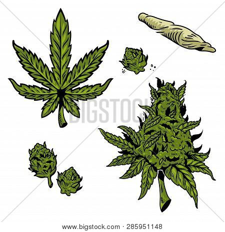 Cannabis Graphic Set With Vintage Drawing Marihuana Hemp Leaf For Oil Textile Smoking Extract Clothe
