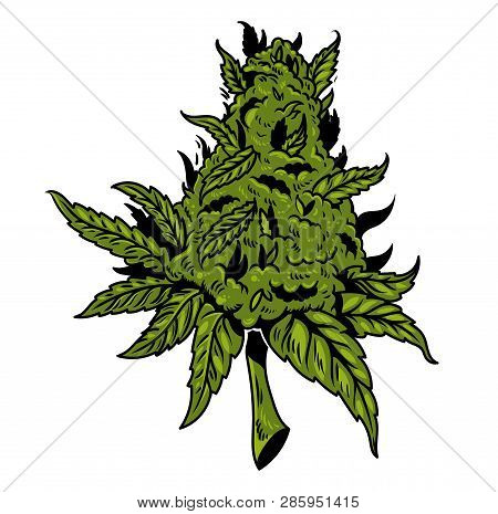 Vintage Green Cannabis Hemp Marihuana Plant For Smoke Clothes Embroidery Oil Extract Food. Drawing C