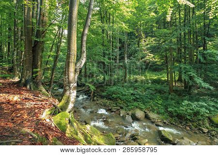 River Among The Rocks In The Forest. Trees On The Edge Of A Cliff. Freshness Of Beautiful Nature Sce
