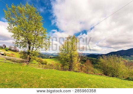 Trees On The Rural Field In Mountains. Wooden Fence Along The Grassy Hillside. Beautiful Countryside