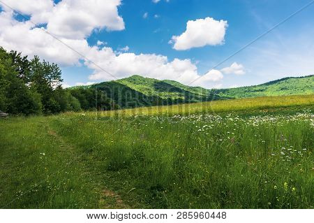 Summer Countryside In Mountains. Path Through Grassy Meadow And Forest. Wonderful Sunny Weather. Flu