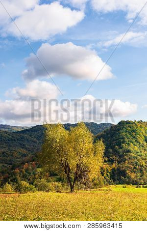 Tree On The Rural Field In Mountains. Beautiful Countryside Scenery In Early Autumn. Simple Vertical