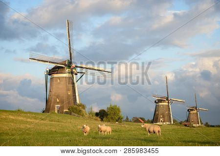 Some Sheep Looking Into The Camera In Front Of A Row Of Three Windmills Under Nice Clouds In The Lat