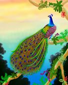 Airbrush drawing of a male peacock in the jungles of Asia. Illustration by nature artist Carolyn McFann. poster
