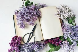 Styled Stock Photo. Spring Feminine Scene, Floral Composition. Decorative Frame Of Beautiful Purple
