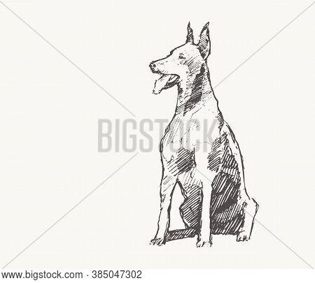 Doberman Pinscher Draw Vector Dog Realistic Sketch