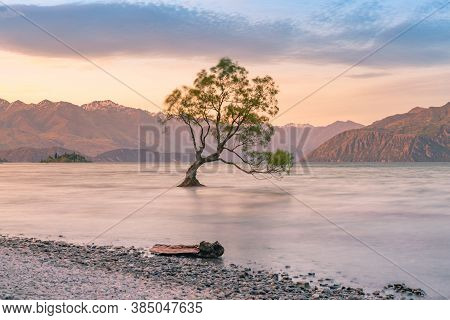 Wanaka Alone Tree In Water Lake With Mountain Background, New Zealand Natural Landscape