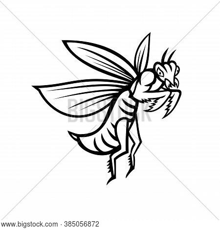 Mascot Illustration Of A Praying Mantis Or Mantis With Forearms Folded Flying Viewed From Side On Is