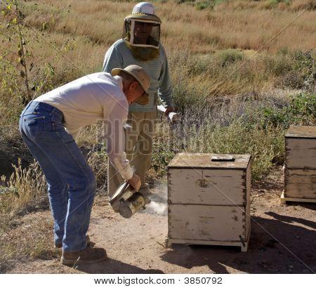 Beekeeper Smokes Bees
