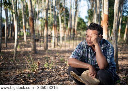 Farmer Agriculturist Rubber Plantation Low Yield