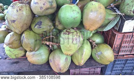 Fresh Green Tender Coconut, Coconuts, Cocos Nucifera Is A Member Of The Palm Tree Family