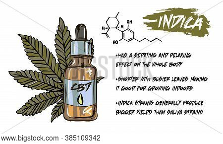 The Benefits Of Cbd Oil, Medical Uses For Cbd Oil, Cannabis Indica Health Benefits Infographics