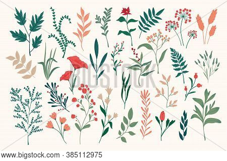 Hand Drawn Floral Objects Set. Isolated Pack Of Botanical Design Elements. Green Plants, Wildflowers
