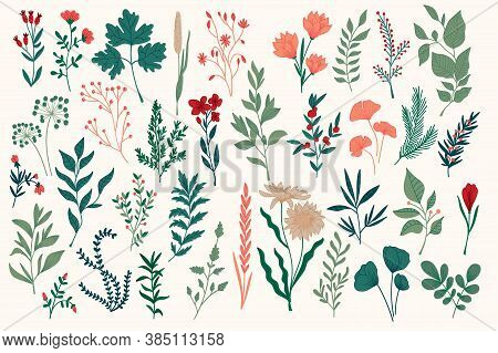 Hand Drawn Colorful Botanical Design Pack. Perfect For Christmas Holidays Prints Designs. Plants Set