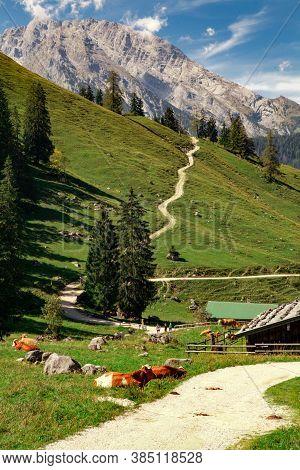 Germany, Bavaria: Alpine Cows Near The Konigssee Lake (berchtesgadener Land)