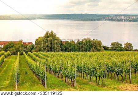 Apple Tree Plantation On Lake Constance, Germany