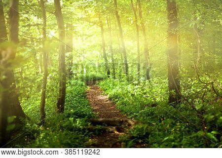 Sun Shines Through Trees, With A Path Through The Green Fore