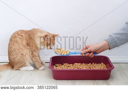 Wood Litter For Litter Boxes For Cats. Ginger Cat At The Tray.