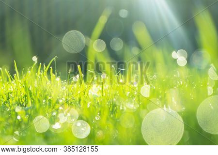 Blurred Background With Green Fresh Summer Lawn Grass. Close Up View Bokeh Light Beautiful Fresh Gra