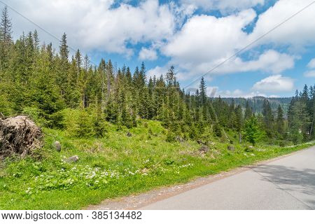 Forest Landscape View In Tatra National Park.
