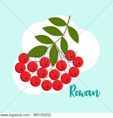 Rowanberry Branch Isolated Vector Illustration. Perfect As A Design Element For Postcards, Invitatio