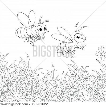 Striped Bee And Wasp Buzzing And Flying Over A Field With Flowering Chamomiles On A Warm Summer Day,