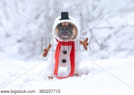 French Bulldog Dog Dressed Up As Snowman With Funny Full Body Suit Costume With Red Scarf, Fake Stic