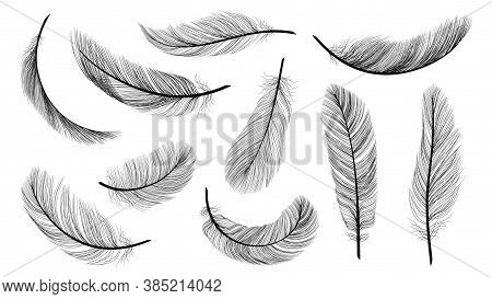 Black Feathers. Isolated Flying Feathering, Plumage Of Black Bird Vector Illustration. Bird Plumage