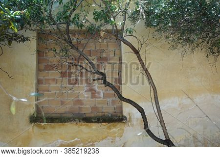 Bricked Up Window Obscured By Tree Branches. Abandoned House Exterior.