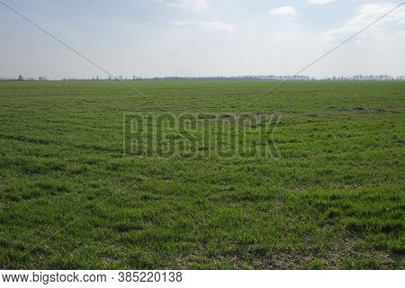 Cloudless Blue Sky Over A Green Farm Field. Fresh Spring Vegetation. Landscape.