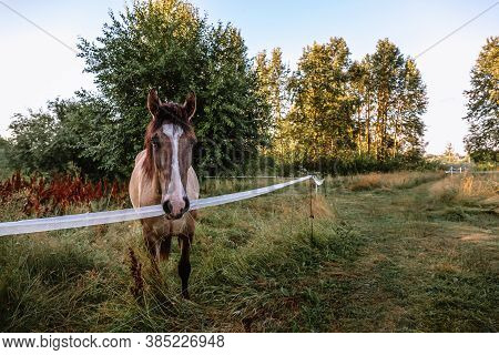 A Portrait Of A Bay Horse Looks Full-face Against A Landscape Background. A Well-groomed Thoroughbre