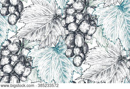 Vector Seamless Pattern With Hand Drawn Fresh Grape Bunch And Leaves In Sketch Style.