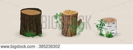 Realistic Wood Stumps Mockup. Collection Of Realism Style Drawn Wooden Cutting And Textured Planks O