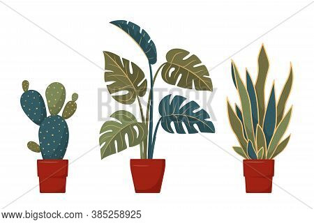 Set Of Vector Home Plants In Flat Style. Potted House Plants - Cactus, Monstera, Sansevieria. Interi