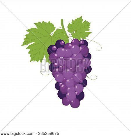Grapes Purple. Fresh Bunch Of Grapes Purple Icon On White Background. Vector Illustration In Flat St